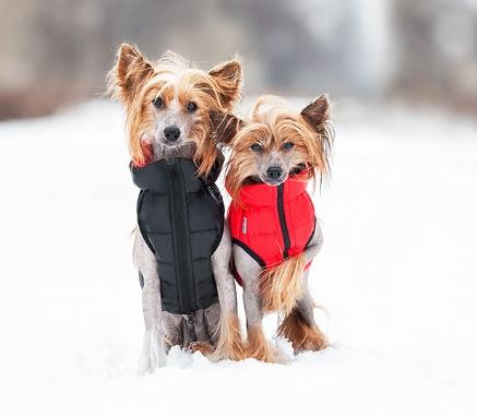 одежда для собак купить в украине киев цены на одежду для собак