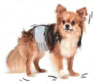 Pet Fashion - Пояс гигиенический для кобелей