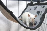 РЕЛАКС ДЕЛЮКС ГАМАК (RelaxDeLuxe Flat) для хорьков и крыс