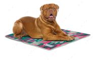 Охлаждающий коврик для собак розовый камуфляж CROCI
