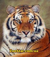 """Алмазная мозаика """"Сибирский Тигр"""", полная выкладка"""