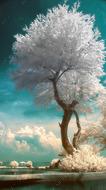"""Алмазная мозаика """"Цветение белой сакуры"""", полная выкладка"""