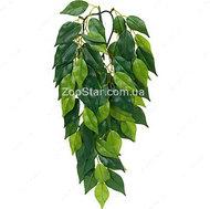 Растение шелковое FICUS