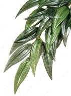 Растение шелковое RUCUS