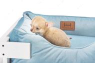 Лежак с деревянным каркасом белого цвета и велюровой лежанкой голубого цвета Dreamer White + Blue Velur