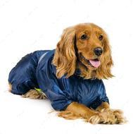дождевик для собак Рейн