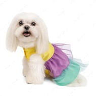 Платье Pet Fashion Лира для собак