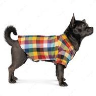 Рубашка Pet Fashion Ститч для собак