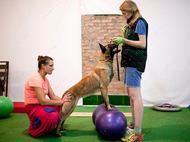 XXL - Пакет Gold - Слушатель с собакой на тренинг к Елене Солодухе  6 человек