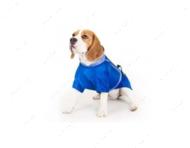 Полукомбинезон для собак теремок COLLAR