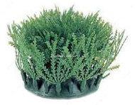Аквариумное растение Hagen Marina Willow Moss, 11 см