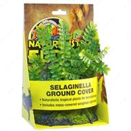 Selaginella Ground Cover – искусственное растение на камне для террариума (селагинелла)