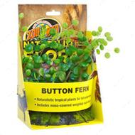 Button Fern - искусственное декоративное растение