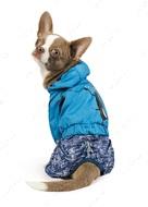 Дождевик Клайд для собак