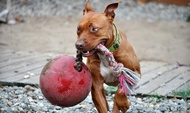 Игрушка для собак Давай играть! ROMP-N-ROLL
