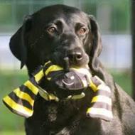 Игрушка для собак Веселый шмель BUMBLE BEE