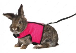 Комплект мягкая шлейка-жилет и поводок для кроликов, морских свинок Soft Harness with Leash