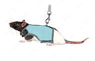 Комплект мягкая шлейка-жилет и поводок для крыс, хорьков Soft Harness with Leash