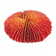 """""""Коралл"""" цветной, круглый 10-13 см, набор 4 штуки"""
