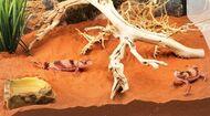 Песок красный для рептилий, Desert Sand Red 4.5 кг.