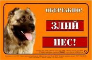 Предупреждающая надпись ОБЕРЕЖНО, ЗЛИЙ ПЕС, кавказская овчарка, полноцвет