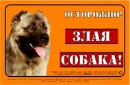 Предупреждающая надпись ОСТОРОЖНО, ЗЛАЯ СОБАКА, кавказская овчарка, полноцвет