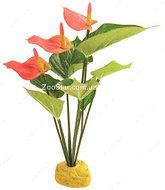 Растение Anthurium Bush