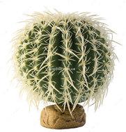 Растение Barrel Cactus