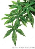 Растение шелковое HANGING RAINFOREST PLANTS