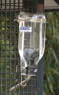 Savic БУТЫЛКА (Glass Bottle) с креплением в клетку - 1