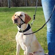"""""""Top Trainer"""" - Нейлоновый, тренировочный намордник для дрессировки собак"""