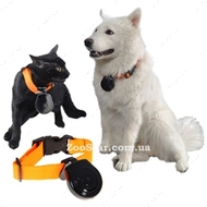 Видеокамера для ношения для собак и кошек