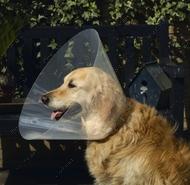 Ветеринарный пластиковый воротник для собак